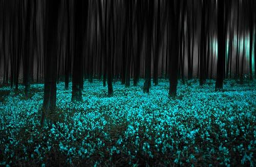 Blue Forest, United Kingdom